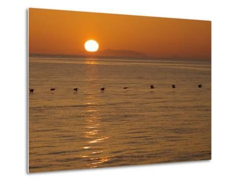 A Flock of Brown Pelicans Flying Low over the Water at Sunset-Ralph Lee Hopkins-Metal Print