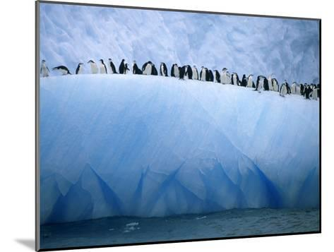 Chinstrap Penguins Lined up Along a Blue Iceberg-Ralph Lee Hopkins-Mounted Photographic Print