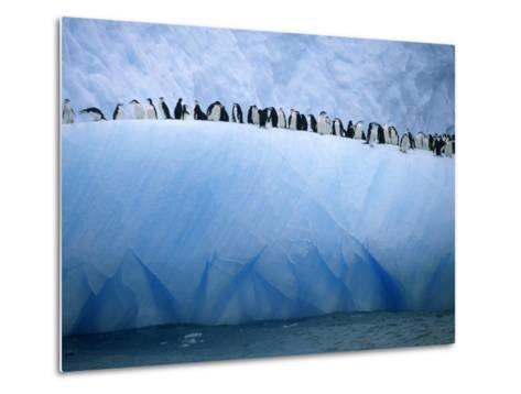 Chinstrap Penguins Lined up Along a Blue Iceberg-Ralph Lee Hopkins-Metal Print