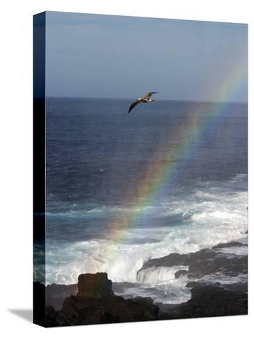 A Blue Footed Booby Soars Above a Rainbow on Espanola Island-Ralph Lee Hopkins-Stretched Canvas Print