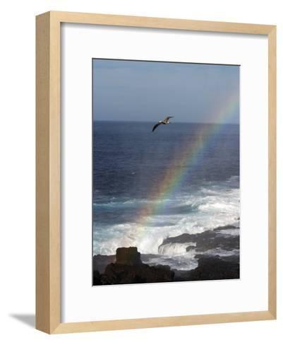 A Blue Footed Booby Soars Above a Rainbow on Espanola Island-Ralph Lee Hopkins-Framed Art Print