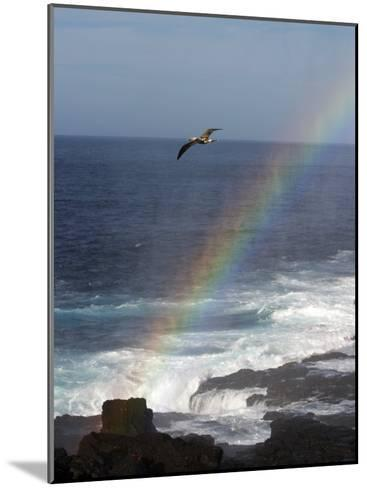 A Blue Footed Booby Soars Above a Rainbow on Espanola Island-Ralph Lee Hopkins-Mounted Photographic Print