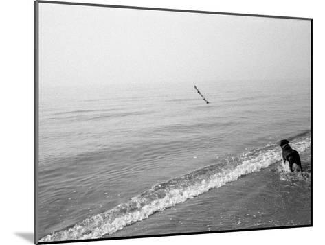 Dog Fetches a Stick at the Shore-Stephen Alvarez-Mounted Photographic Print