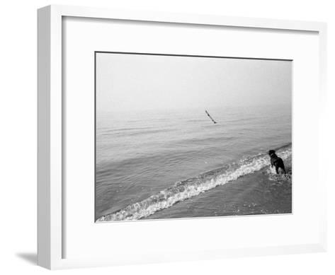 Dog Fetches a Stick at the Shore-Stephen Alvarez-Framed Art Print