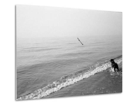 Dog Fetches a Stick at the Shore-Stephen Alvarez-Metal Print