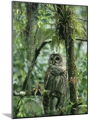 Barred Owl Perches on a Tree Branch Amid Air Plants-Klaus Nigge-Mounted Photographic Print