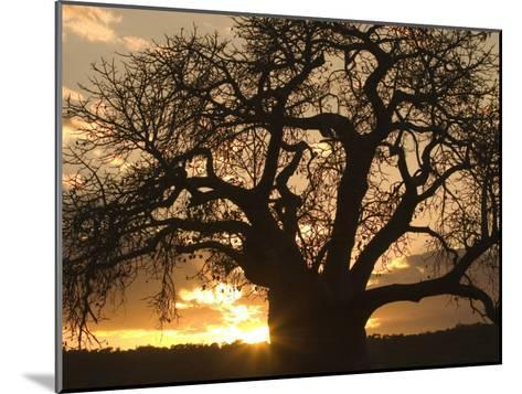 Silhouetted African Baobab Tree at Sunset-Roy Toft-Mounted Photographic Print