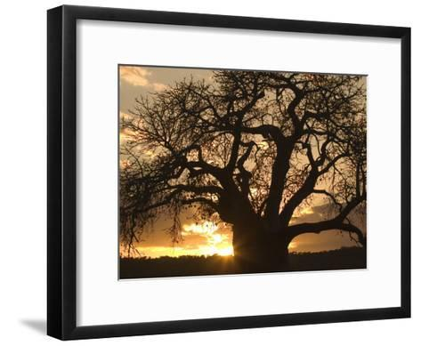 Silhouetted African Baobab Tree at Sunset-Roy Toft-Framed Art Print