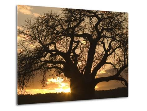 Silhouetted African Baobab Tree at Sunset-Roy Toft-Metal Print