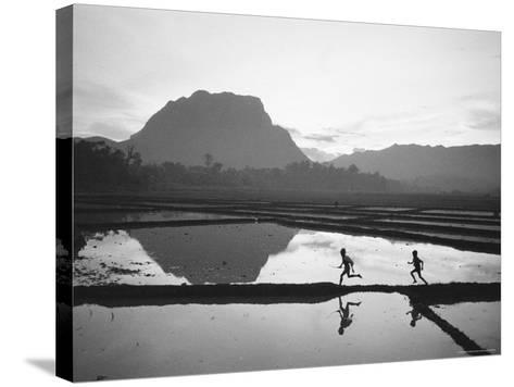 Boys Running Through Flooded Rice Paddy-John Dominis-Stretched Canvas Print