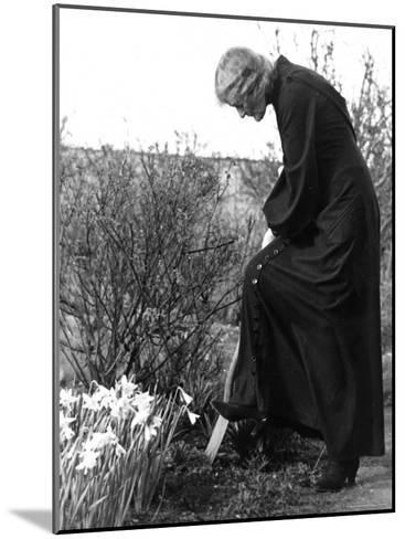 Madame Maud Gonne MacBride Working in Her Garden-John Phillips-Mounted Photographic Print