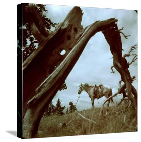Rancher Leading Horse Across Field as Seen Through Branches of Fallen Tree, Trinchera Ranch-Loomis Dean-Stretched Canvas Print