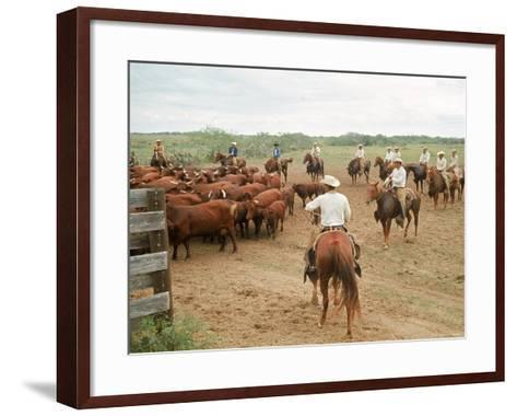 Cowboys on the King Ranch Move Santa Gertrudis Cattle from the Roundup Area Into the Working Pens-Ralph Crane-Framed Art Print