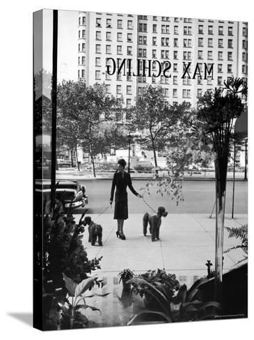 Chic Woman Walking Her Poodles Along Sidewalk on Fifth Avenue-Alfred Eisenstaedt-Stretched Canvas Print
