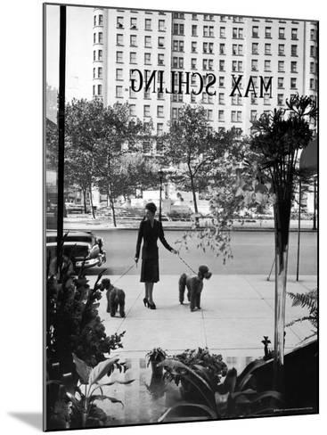 Chic Woman Walking Her Poodles Along Sidewalk on Fifth Avenue-Alfred Eisenstaedt-Mounted Photographic Print