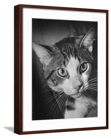 Cat Being Used by Scientists Conducting Psychology Testing at Brooklyn College-Nina Leen-Framed Art Print