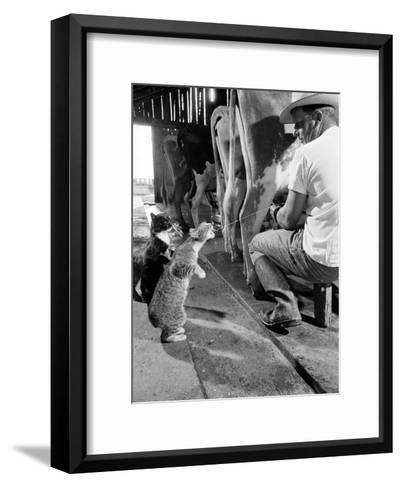 Cats Blackie and Brownie Catching Squirts of Milk During Milking at Arch Badertscher's Dairy Farm-Nat Farbman-Framed Art Print