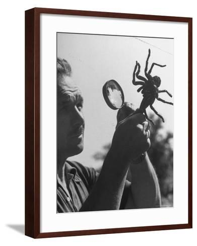 Man Examining a Large Spider, a Tarantula-Alfred Eisenstaedt-Framed Art Print