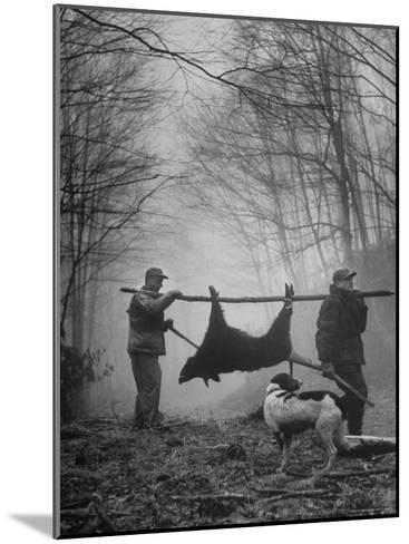Jim Atchley and Dr. Ray Atchley Carrying Boar That They Killed-Ralph Crane-Mounted Photographic Print