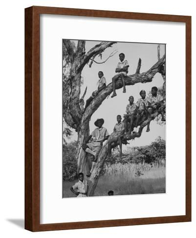 Boy Scout Troop Sitting in a Tree-Dmitri Kessel-Framed Art Print