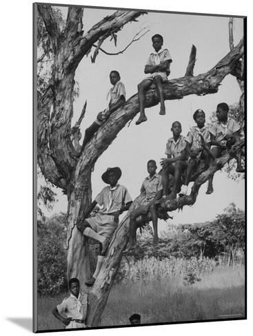 Boy Scout Troop Sitting in a Tree-Dmitri Kessel-Mounted Photographic Print