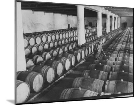 Cellar of Maturing Wines as Wine Maker Tests with Pipette-Carlo Bavagnoli-Mounted Photographic Print