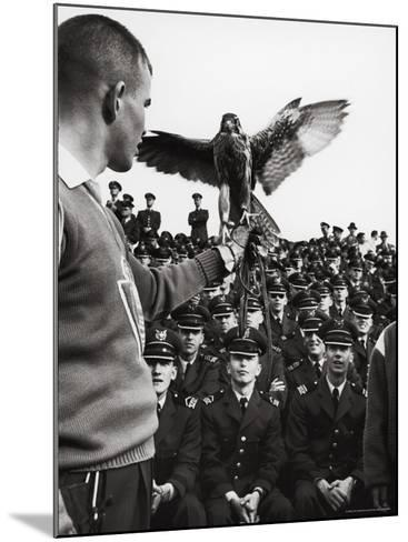 Air Force Academy Cadets Watching Handler Performing with the Air Force Mascot, a Falcon-Leonard Mccombe-Mounted Photographic Print