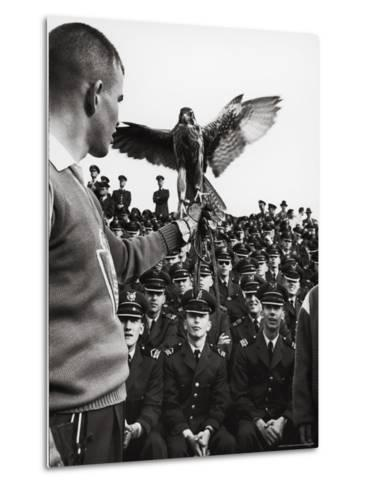 Air Force Academy Cadets Watching Handler Performing with the Air Force Mascot, a Falcon-Leonard Mccombe-Metal Print