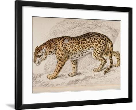 Engraving of a Jaguar from The Naturalist's Library Mammalia--Framed Art Print