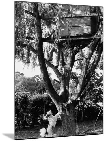 Children Playing in a Treehouse-Arthur Schatz-Mounted Photographic Print