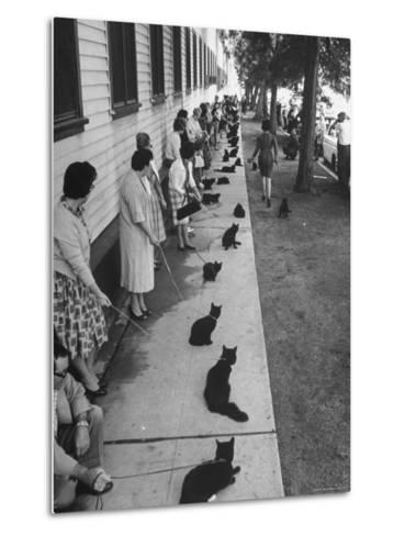 """Owners with Their Black Cats, Waiting in Line For Audition in Movie """"Tales of Terror""""-Ralph Crane-Metal Print"""