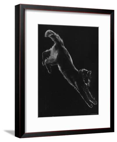 Portrait of Blackie, Gjon Mili's Cat-Gjon Mili-Framed Art Print