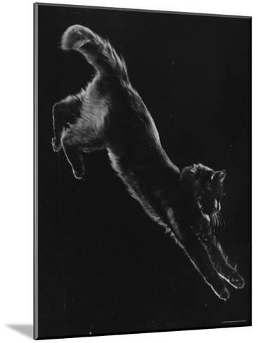 Portrait of Blackie, Gjon Mili's Cat-Gjon Mili-Mounted Photographic Print