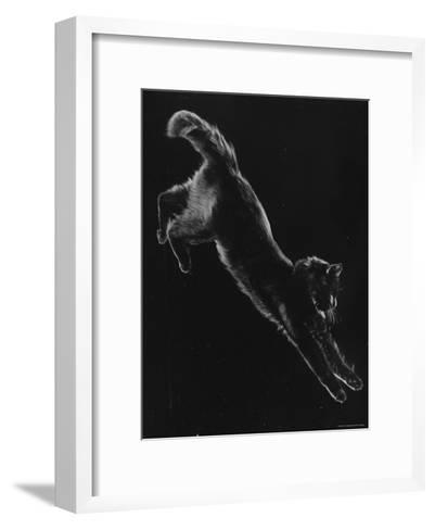 Portrait of Blackie, Gjon Mili's Cat-Gjon Mili-Framed Art Print