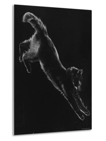 Portrait of Blackie, Gjon Mili's Cat-Gjon Mili-Metal Print