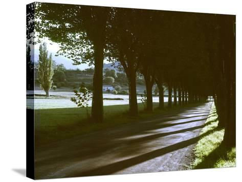 Tree Lined Roadway Somewhere in Provence-Gjon Mili-Stretched Canvas Print