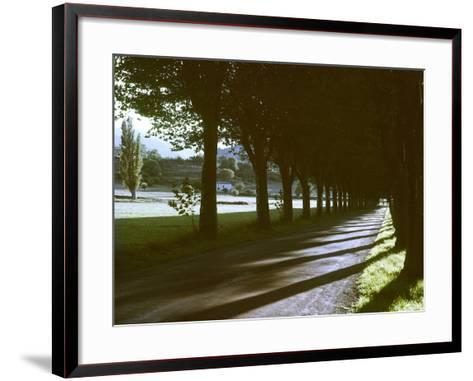 Tree Lined Roadway Somewhere in Provence-Gjon Mili-Framed Art Print