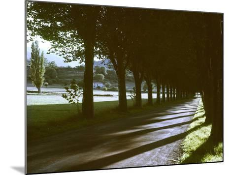 Tree Lined Roadway Somewhere in Provence-Gjon Mili-Mounted Photographic Print