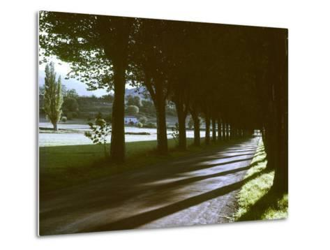 Tree Lined Roadway Somewhere in Provence-Gjon Mili-Metal Print