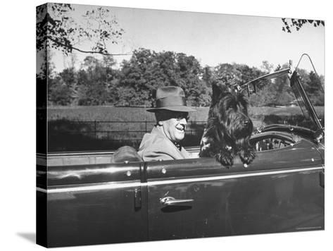 President Franklin D. Roosevelt Driving in His Convertible with His Dog Fala Through Hyde Park-George Skadding-Stretched Canvas Print