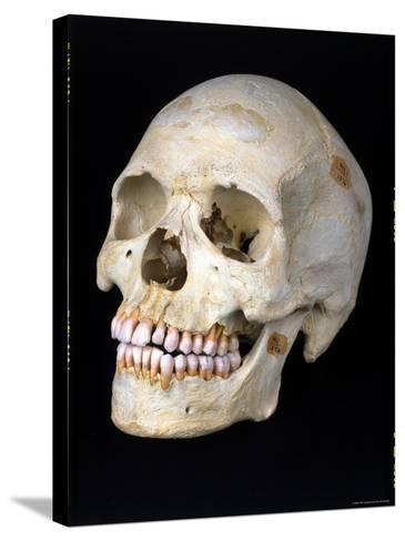 Modern Homo Sapiens Skull-Ted Thai-Stretched Canvas Print