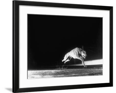 Racing Greyhound Captured at Full Speed by High Speed Camera in Race at Wonderland Park-Gjon Mili-Framed Art Print