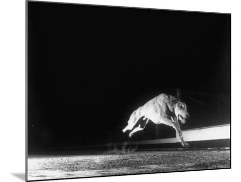 Racing Greyhound Captured at Full Speed by High Speed Camera in Race at Wonderland Park-Gjon Mili-Mounted Photographic Print