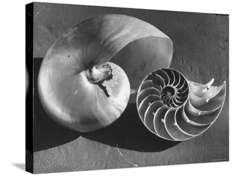 The Interior Design of the Shell-Fritz Goro-Stretched Canvas Print