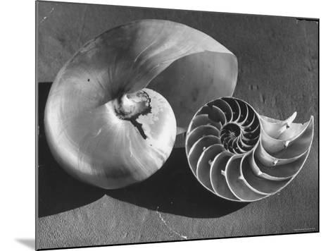 The Interior Design of the Shell-Fritz Goro-Mounted Photographic Print