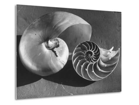 The Interior Design of the Shell-Fritz Goro-Metal Print