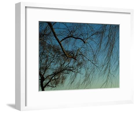 Branches of a Weeping Willow Tree against a Blue Sky-Todd Gipstein-Framed Art Print