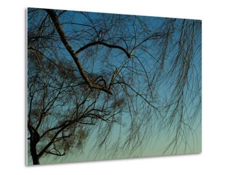 Branches of a Weeping Willow Tree against a Blue Sky-Todd Gipstein-Metal Print