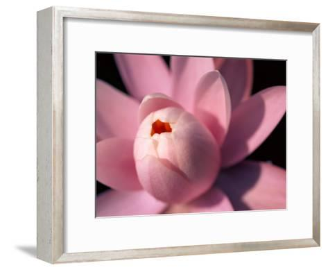 A Close View of a Pink Fragrant Water Lily-Medford Taylor-Framed Art Print