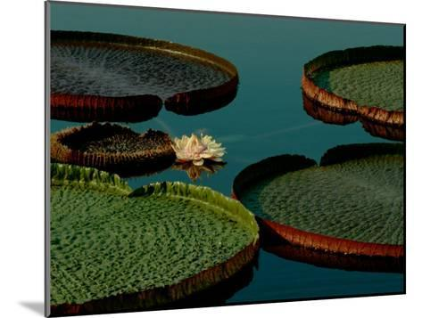 Victoria Water Lilies-James P^ Blair-Mounted Photographic Print